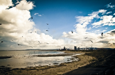 South Gare gulls