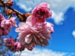 Blossom and blue
