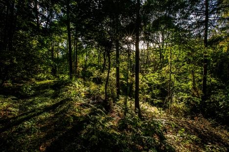 Spout Wood