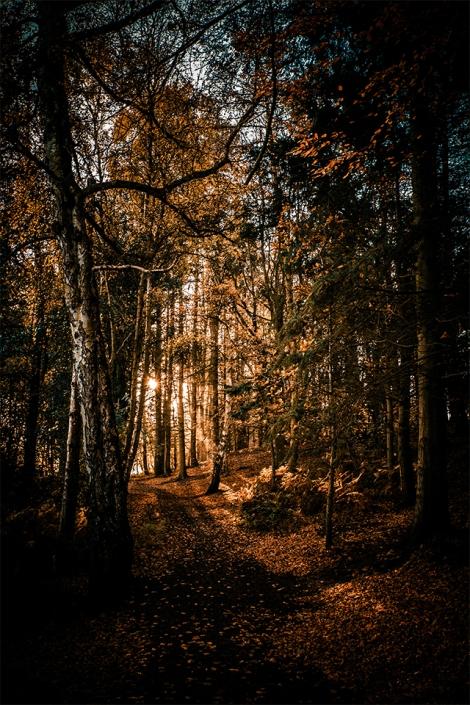 Colemere Autumn