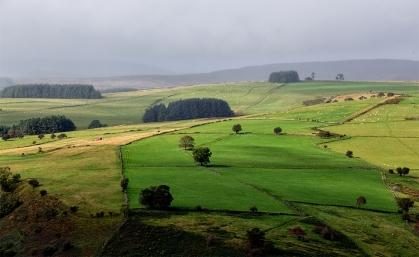 Berwyn View