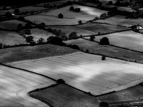 Mono Fields
